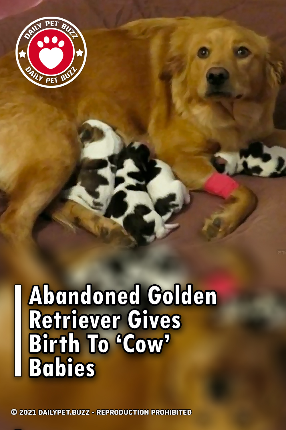 Abandoned Golden Retriever Gives Birth To 'Cow' Babies