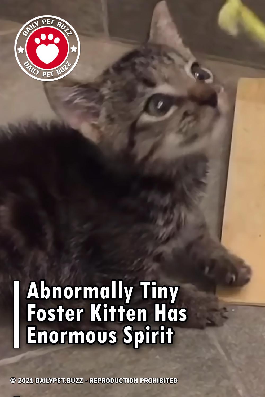 Abnormally Tiny Foster Kitten Has Enormous Spirit