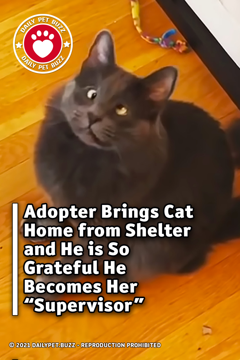 """Adopter Brings Cat Home from Shelter and He is So Grateful He Becomes Her """"Supervisor\"""