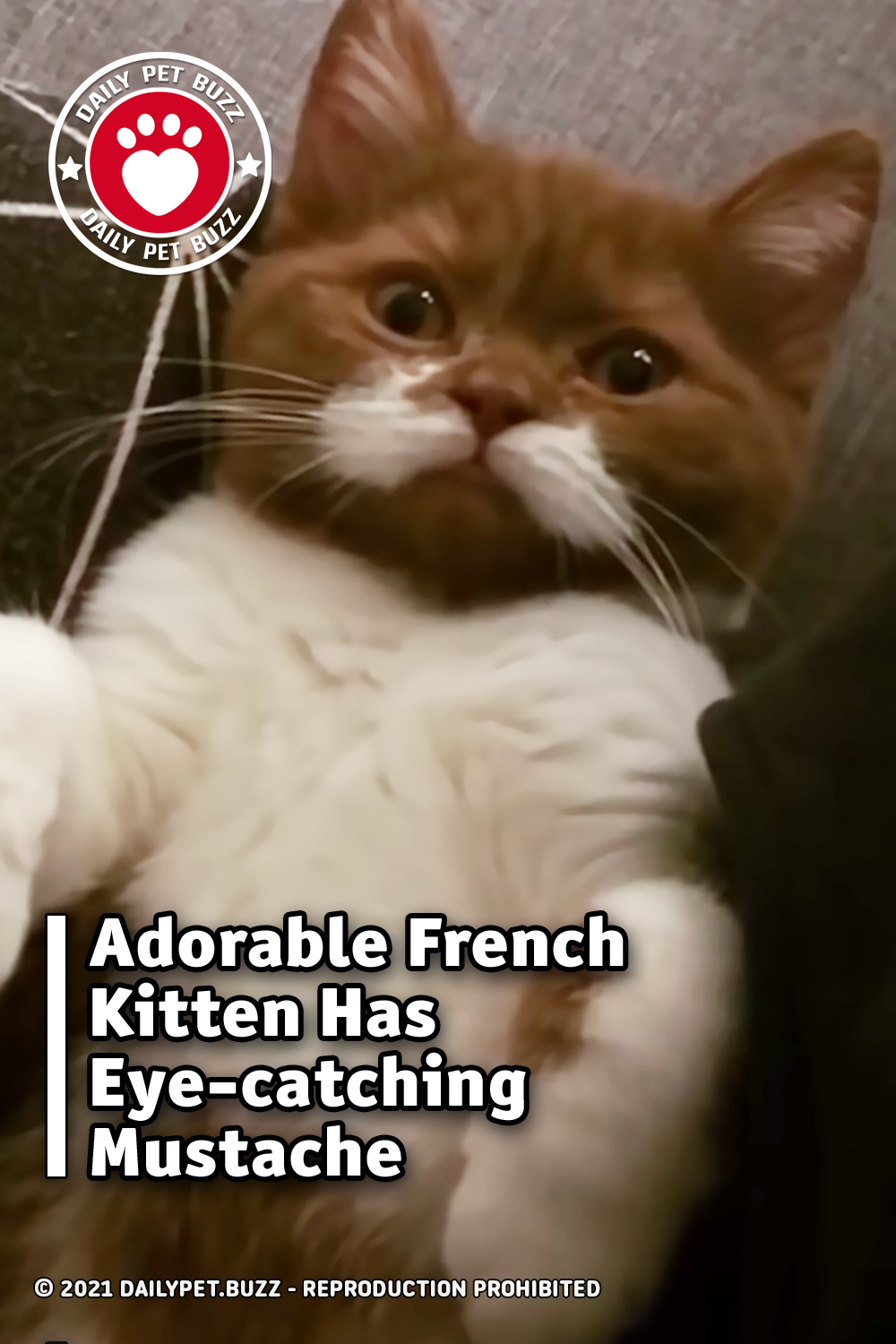 Adorable French Kitten Has Eye-catching Mustache