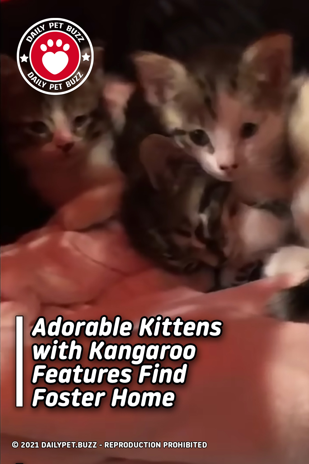 Adorable Kittens with Kangaroo Features Find Foster Home