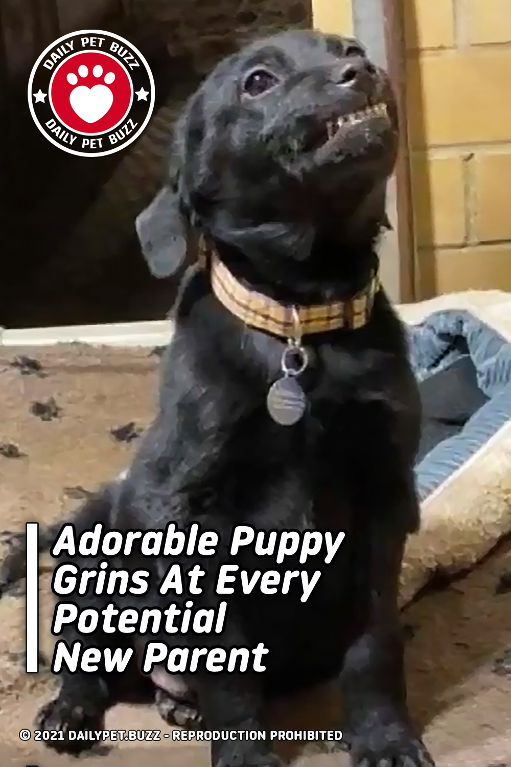 Adorable Puppy Grins At Every Potential New Parent