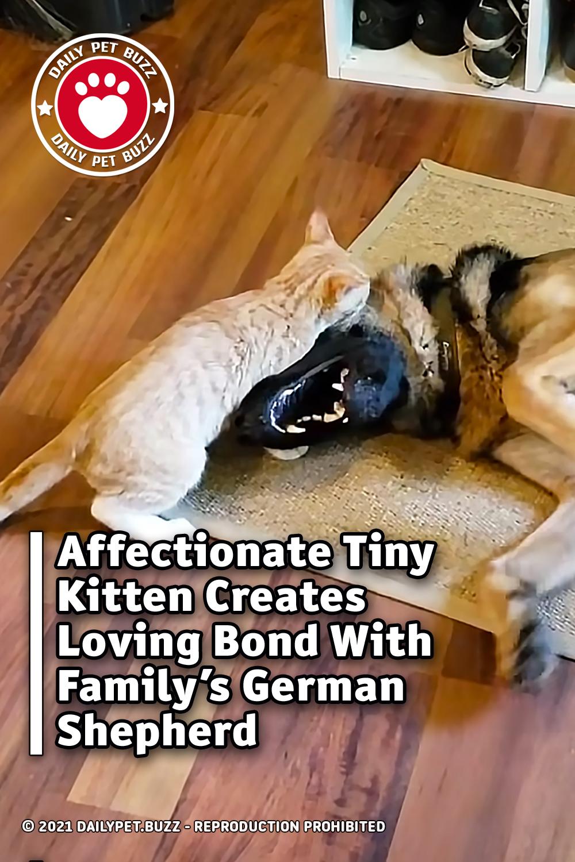 Affectionate Tiny Kitten Creates Loving Bond With Family's German Shepherd
