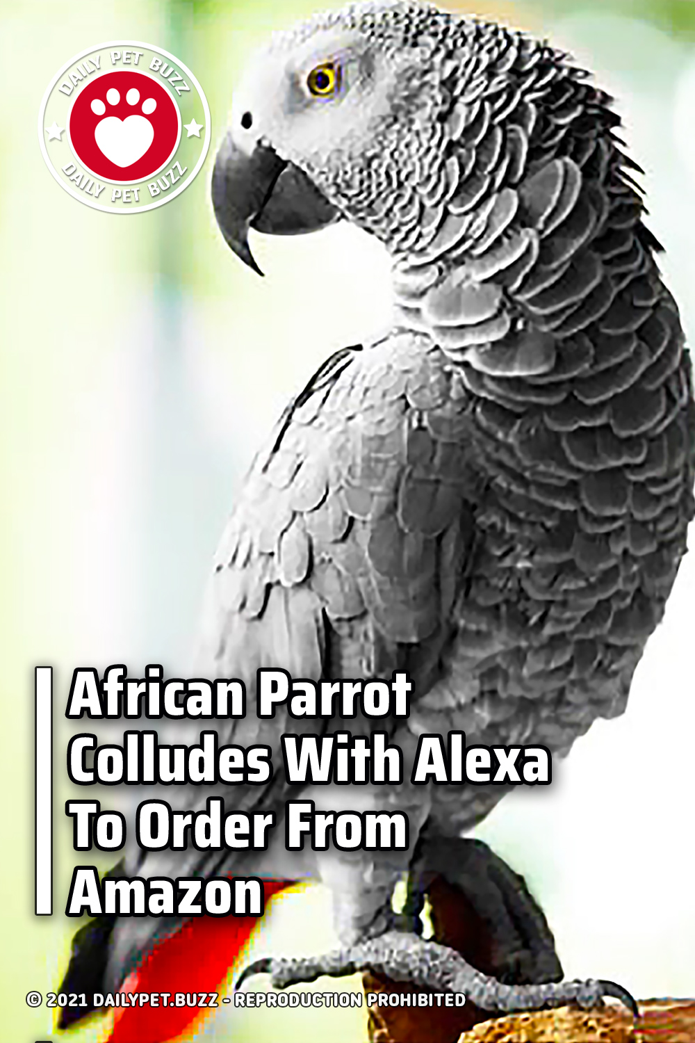 African Parrot Colludes With Alexa To Order From Amazon