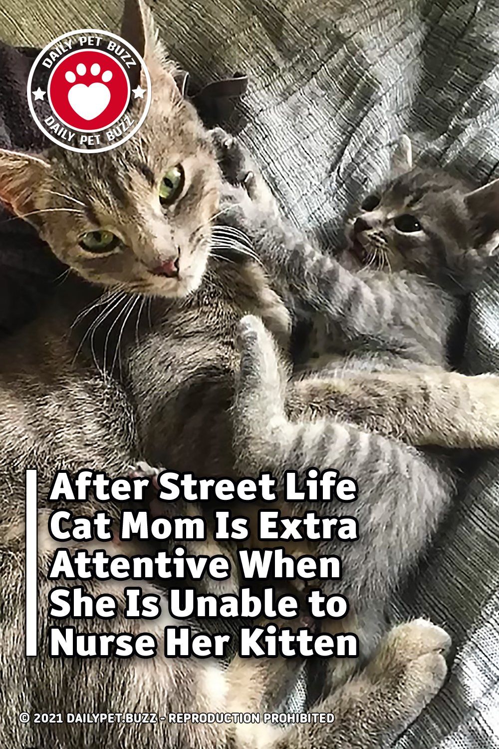 After Street Life Cat Mom Is Extra Attentive When She Is Unable to Nurse Her Kitten
