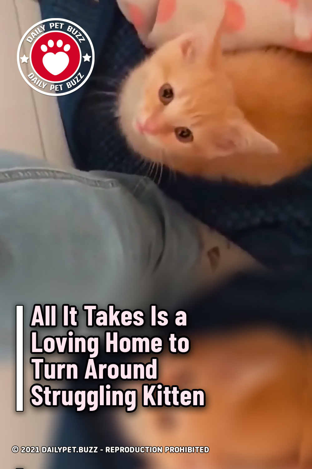 All It Takes Is a Loving Home to Turn Around Struggling Kitten