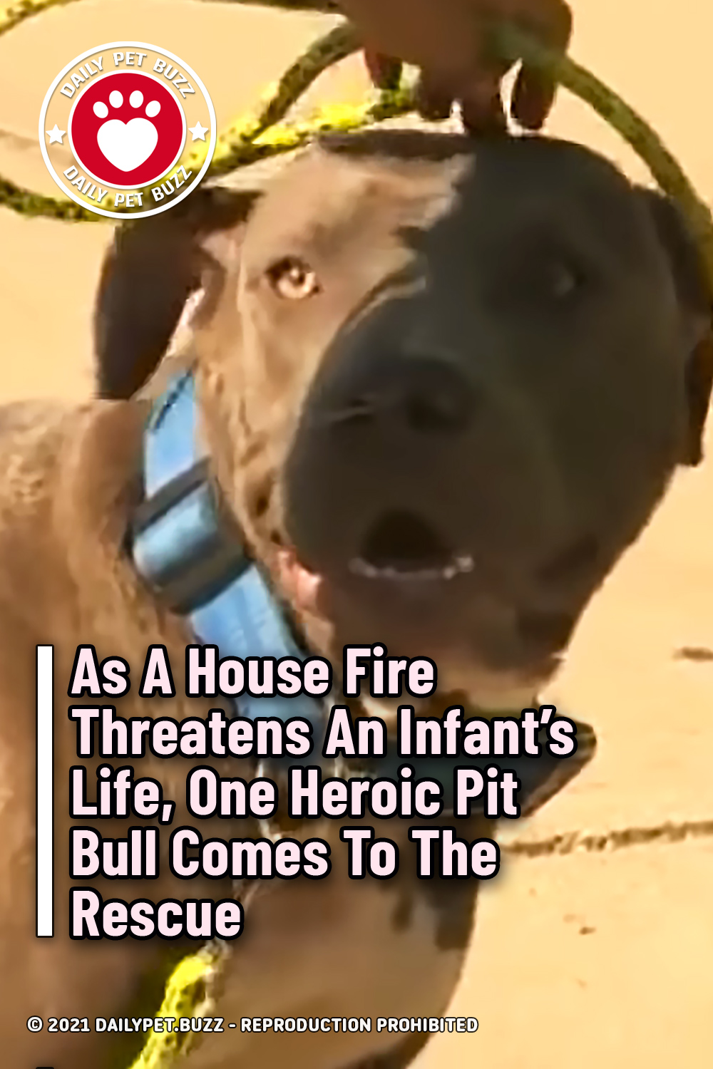 As A House Fire Threatens An Infant's Life, One Heroic Pit Bull Comes To The Rescue