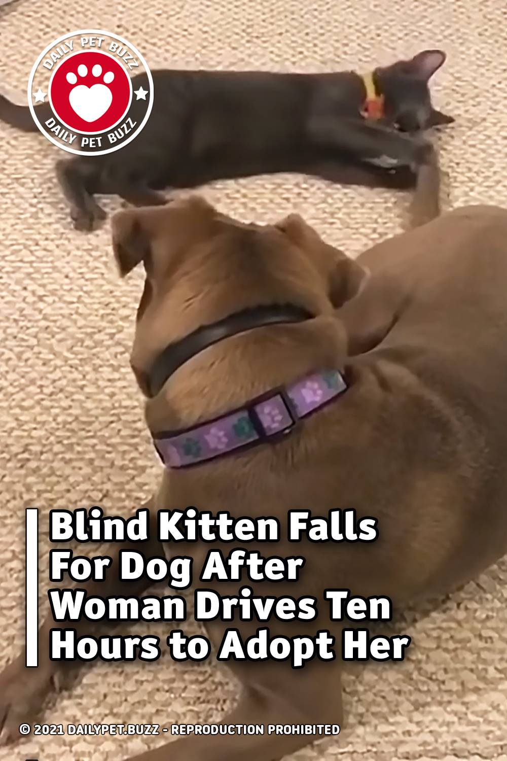 Blind Kitten Falls For Dog After Woman Drives Ten Hours to Adopt Her