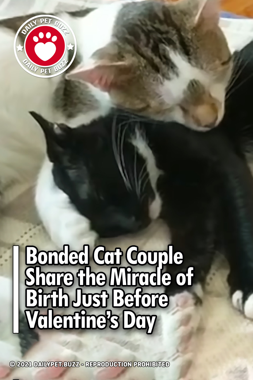 Bonded Cat Couple Share the Miracle of Birth Just Before Valentine's Day