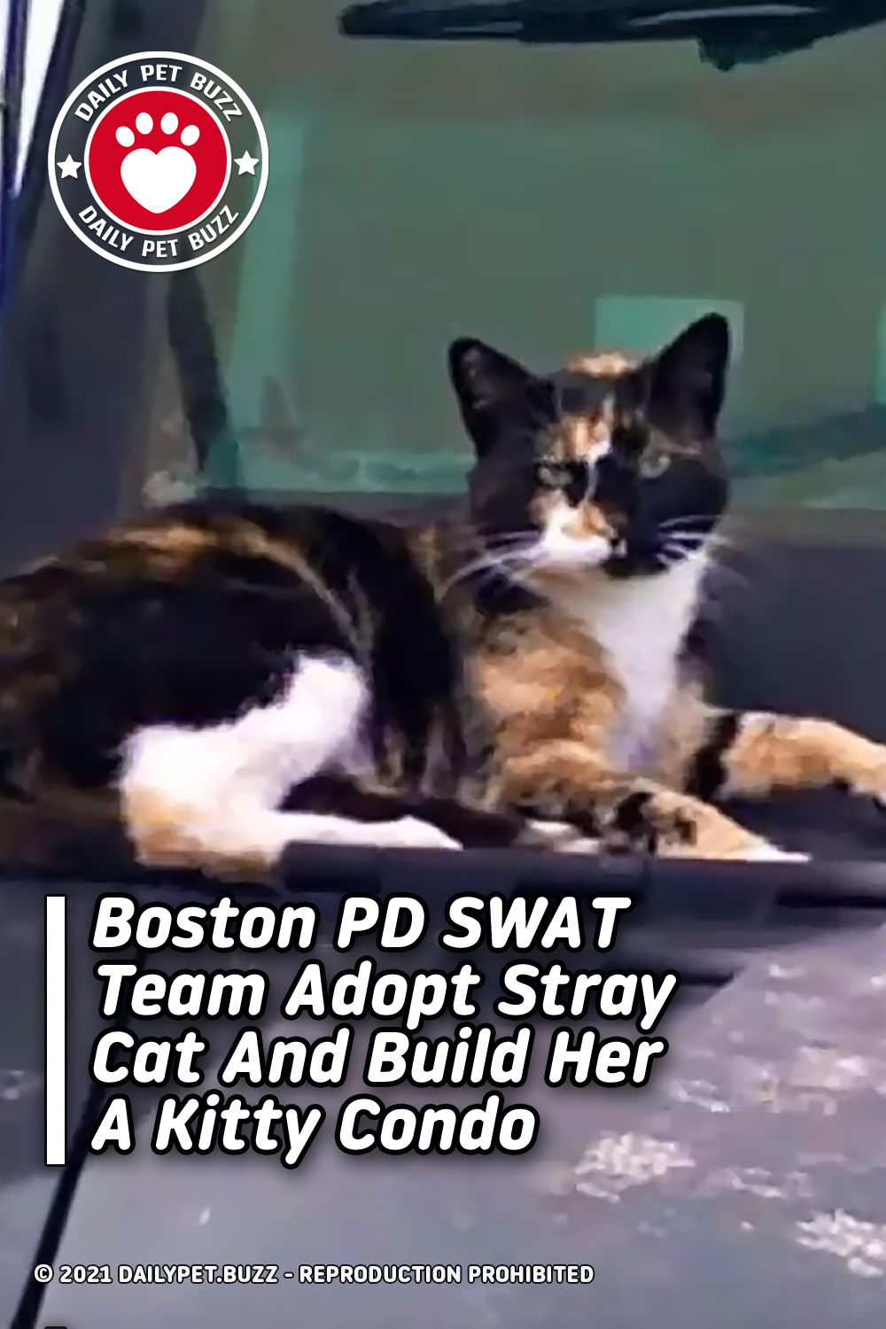 Boston PD SWAT Team Adopt Stray Cat And Build Her A Kitty Condo