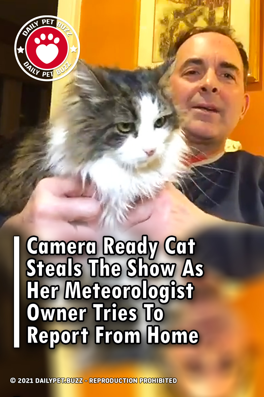 Camera Ready Cat Steals The Show As Her Meteorologist Owner Tries To Report From Home