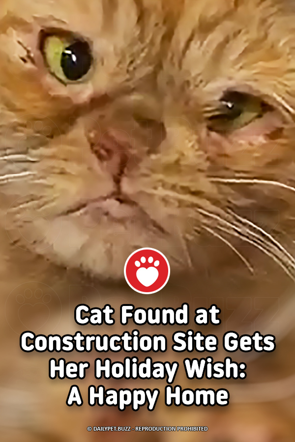 Cat Found at Construction Site Gets Her Holiday Wish: A Happy Home