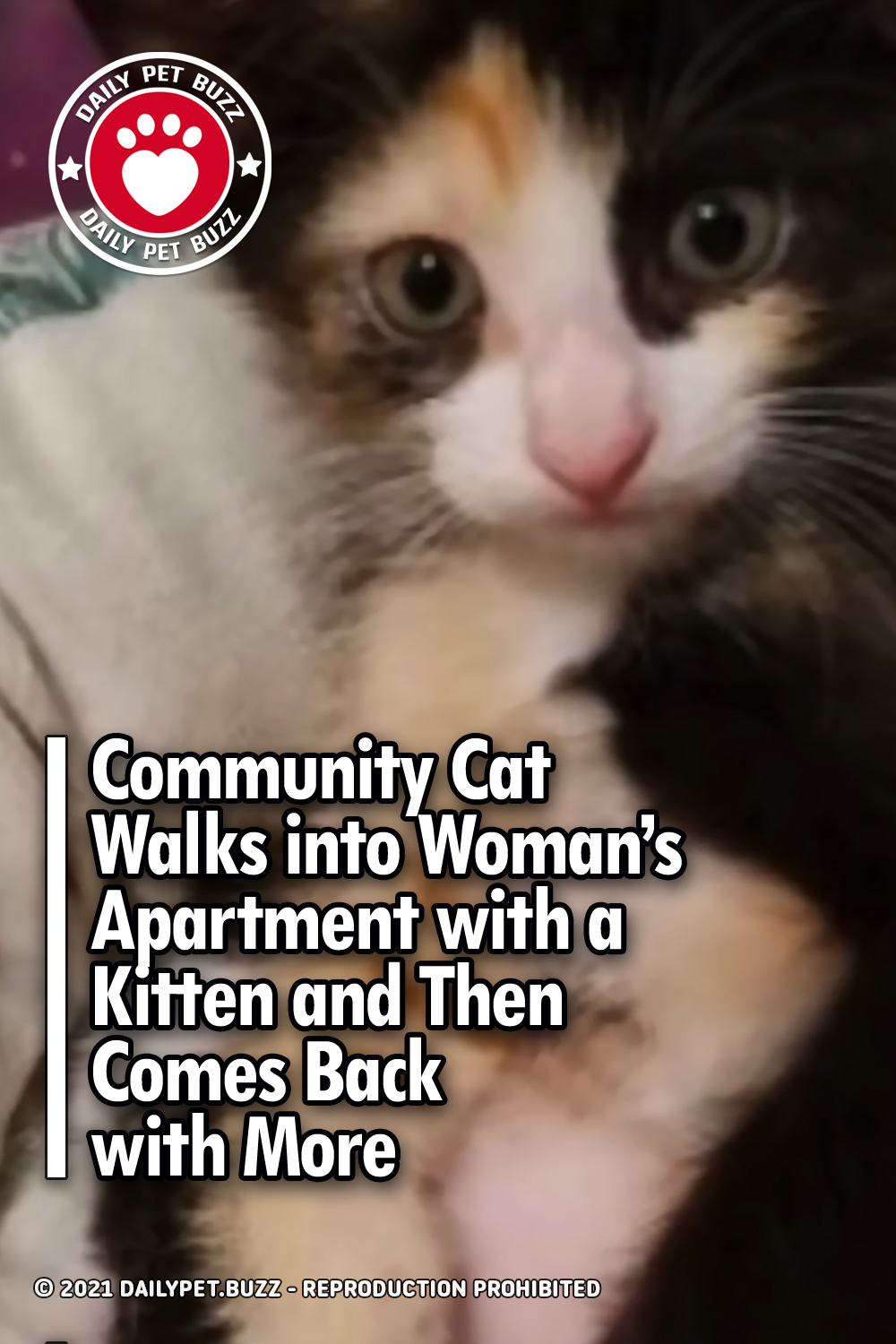 Community Cat Walks into Woman's Apartment with a Kitten and Then Comes Back with More