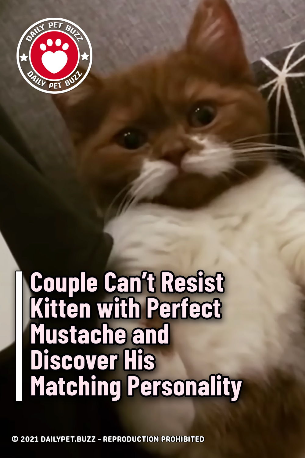 Couple Can't Resist Kitten with Perfect Mustache and Discover His Matching Personality