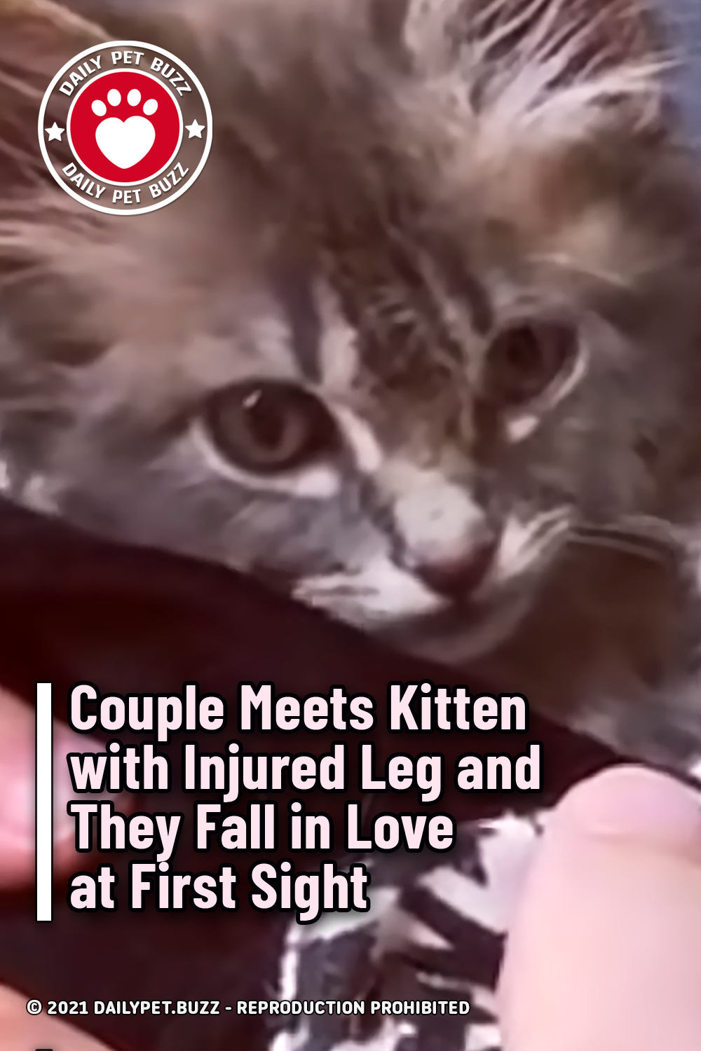 Couple Meets Kitten with Injured Leg and They Fall in Love at First Sight