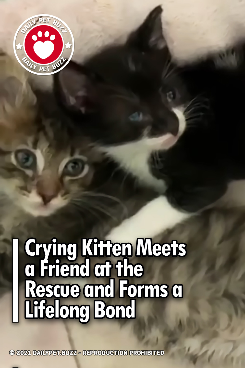 Crying Kitten Meets a Friend at the Rescue and Forms a Lifelong Bond