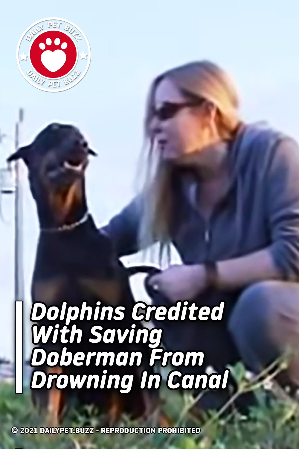 Dolphins Credited With Saving Doberman From Drowning In Canal