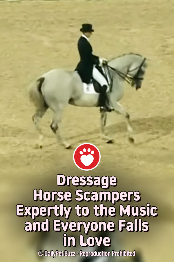 Dressage Horse Scampers Expertly to the Music and Everyone Falls in Love