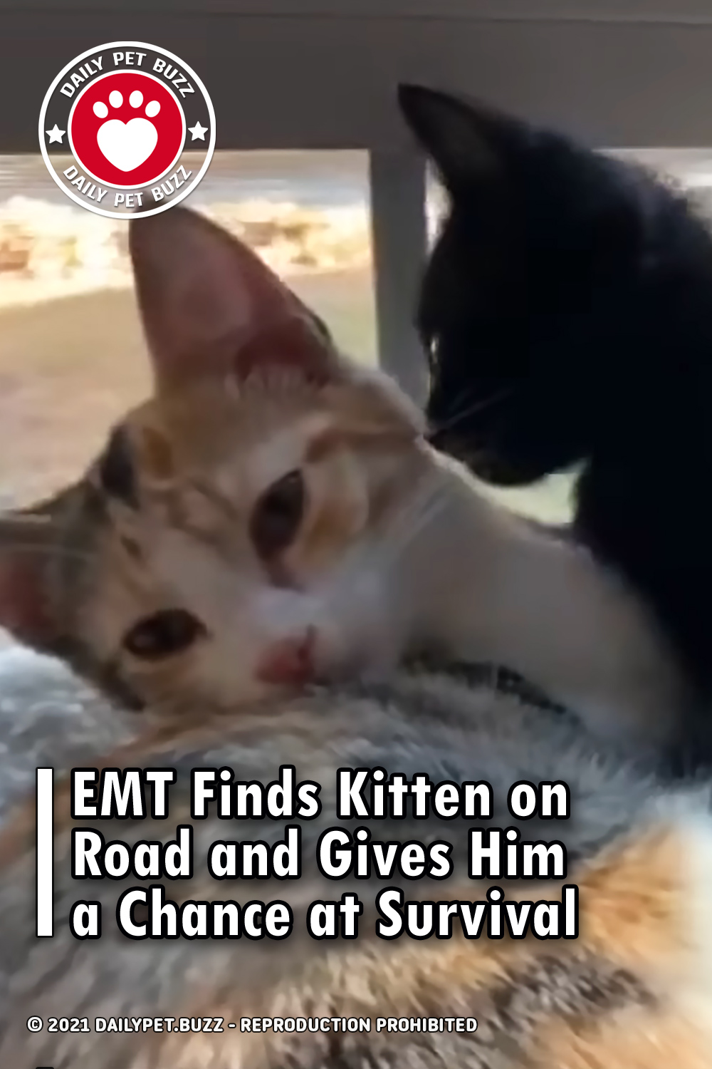EMT Finds Kitten on Road and Gives Him a Chance at Survival