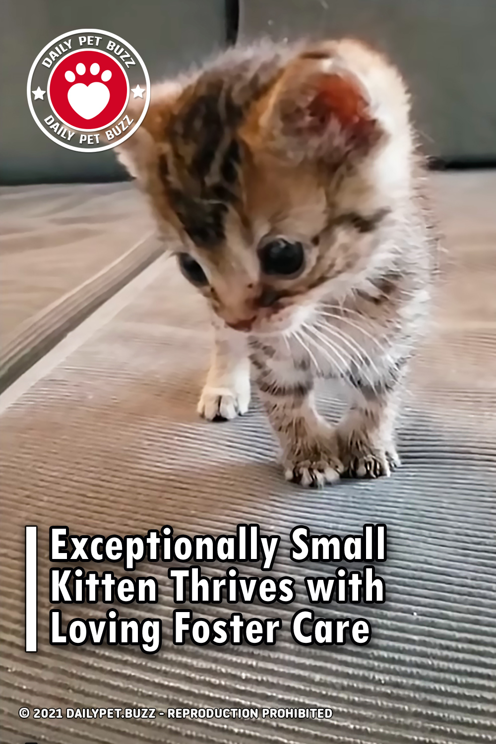 Exceptionally Small Kitten Thrives with Loving Foster Care