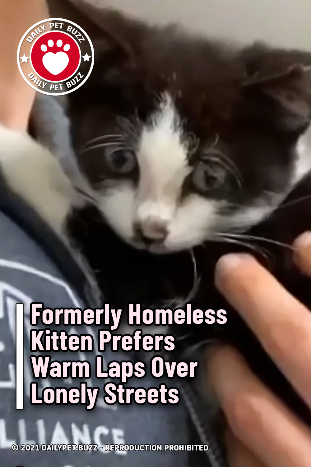 Formerly Homeless Kitten Prefers Warm Laps Over Lonely Streets