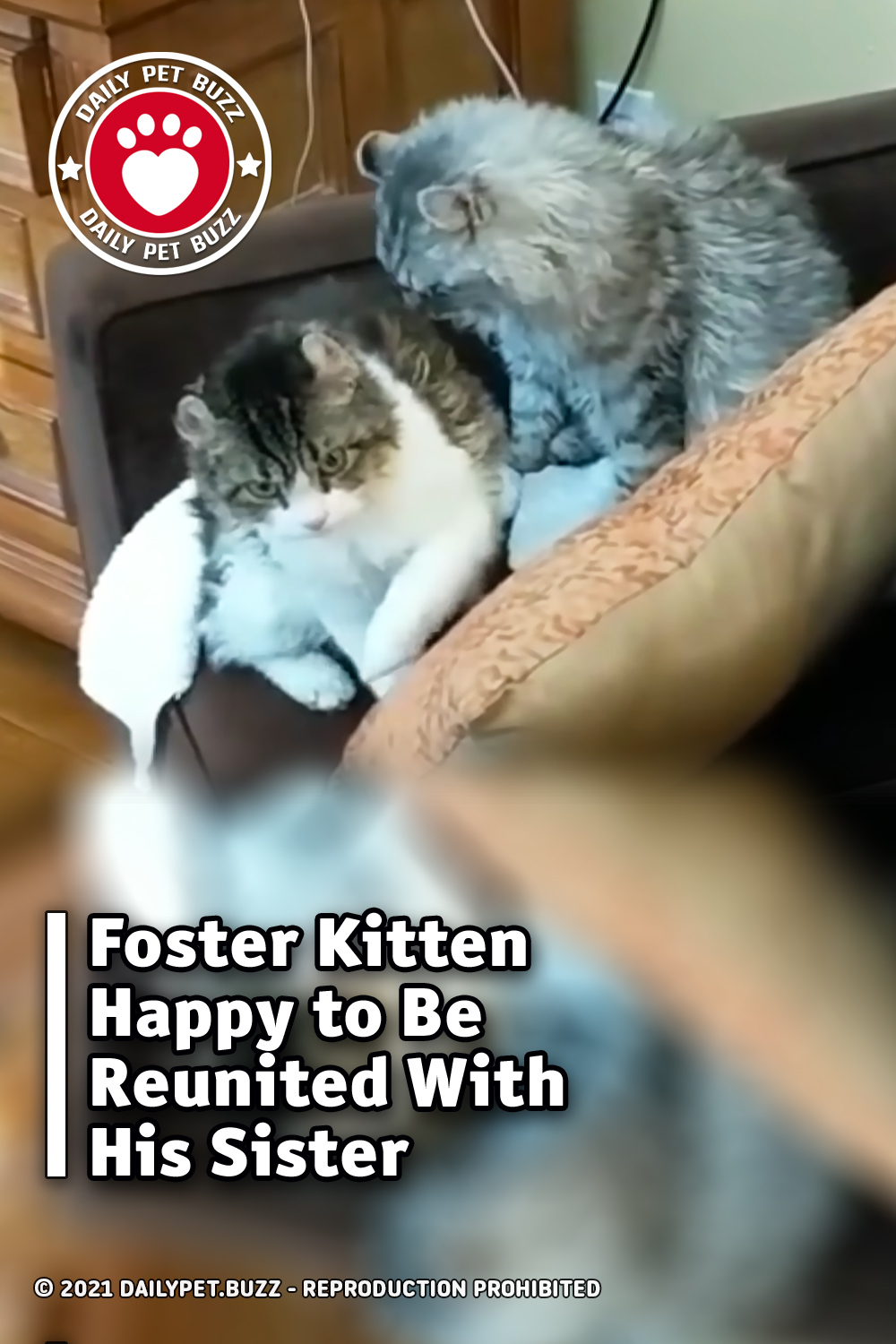 Foster Kitten Happy to Be Reunited With His Sister
