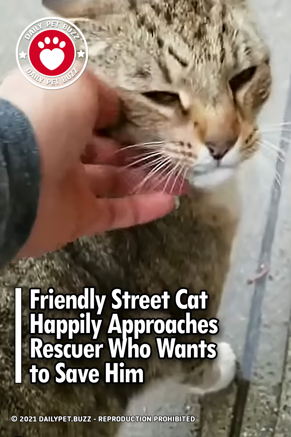 Friendly Street Cat Happily Approaches Rescuer Who Wants to Save Him