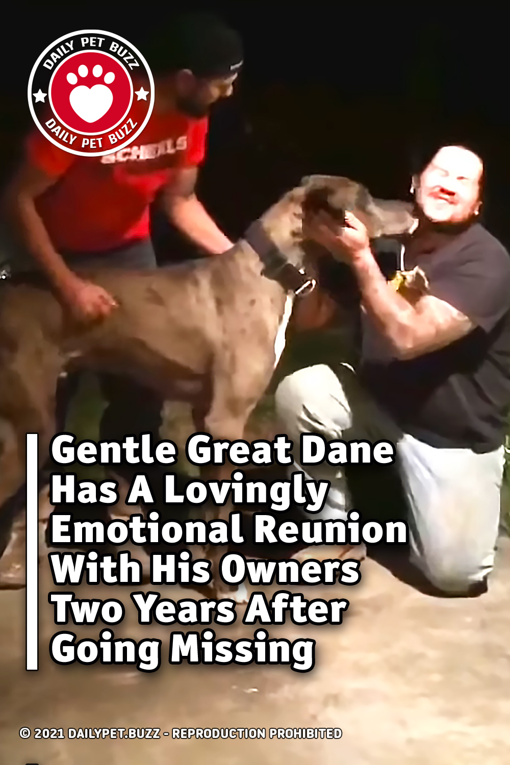 Gentle Great Dane Has A Lovingly Emotional Reunion With His Owners Two Years After Going Missing