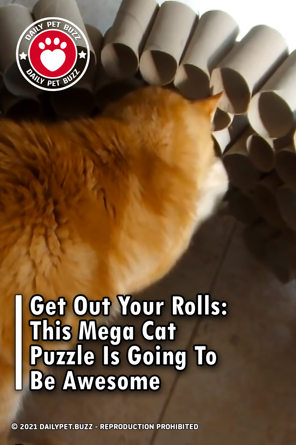 Get Out Your Rolls: This Mega Cat Puzzle Is Going To Be Awesome