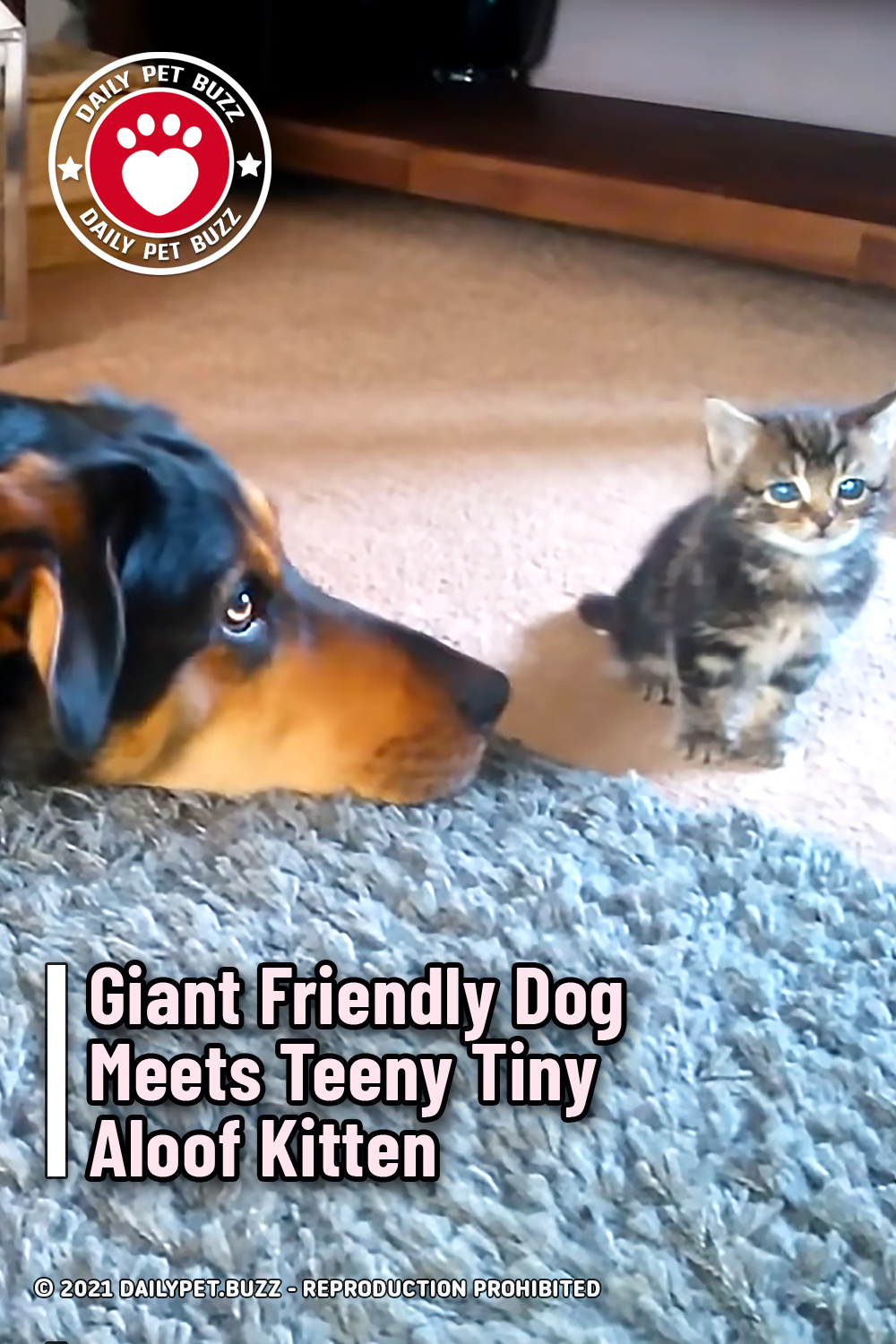 Giant Friendly Dog Meets Teeny Tiny Aloof Kitten