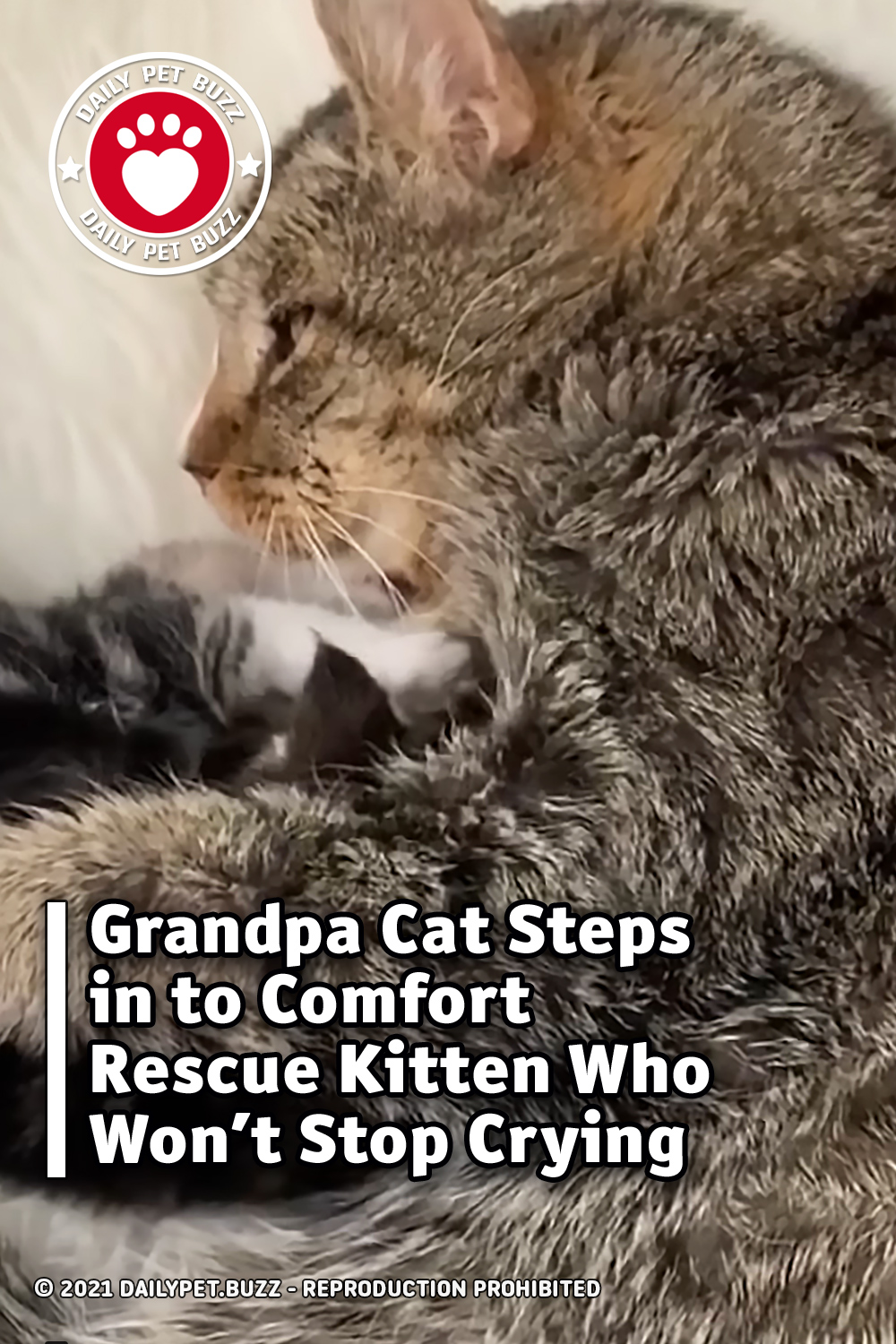 Grandpa Cat Steps in to Comfort Rescue Kitten Who Won't Stop Crying