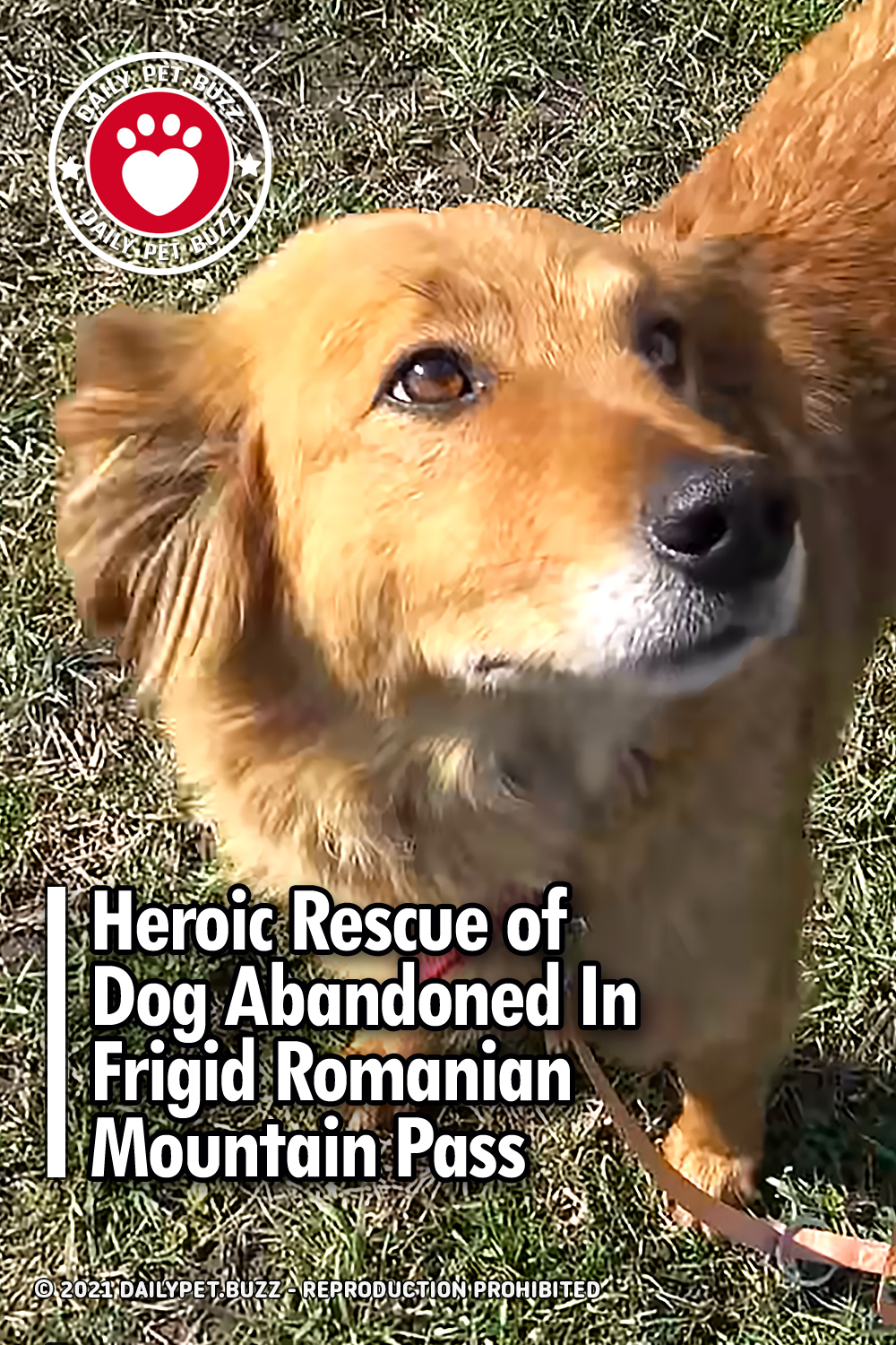Heroic Rescue of Dog Abandoned In Frigid Romanian Mountain Pass