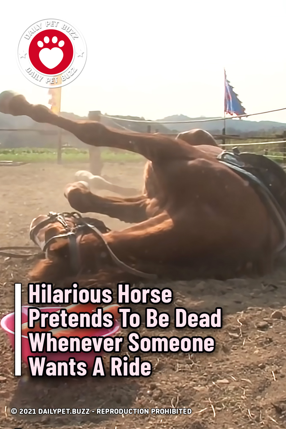 Hilarious Horse Pretends To Be Dead Whenever Someone Wants A Ride