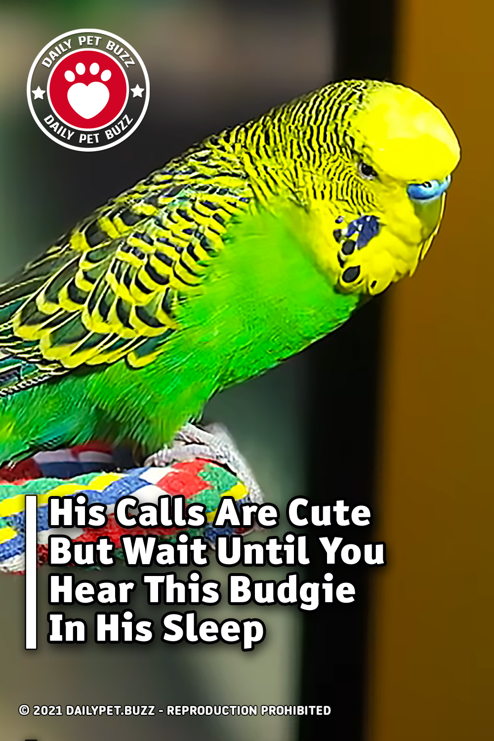 His Calls Are Cute But Wait Until You Hear This Budgie In His Sleep