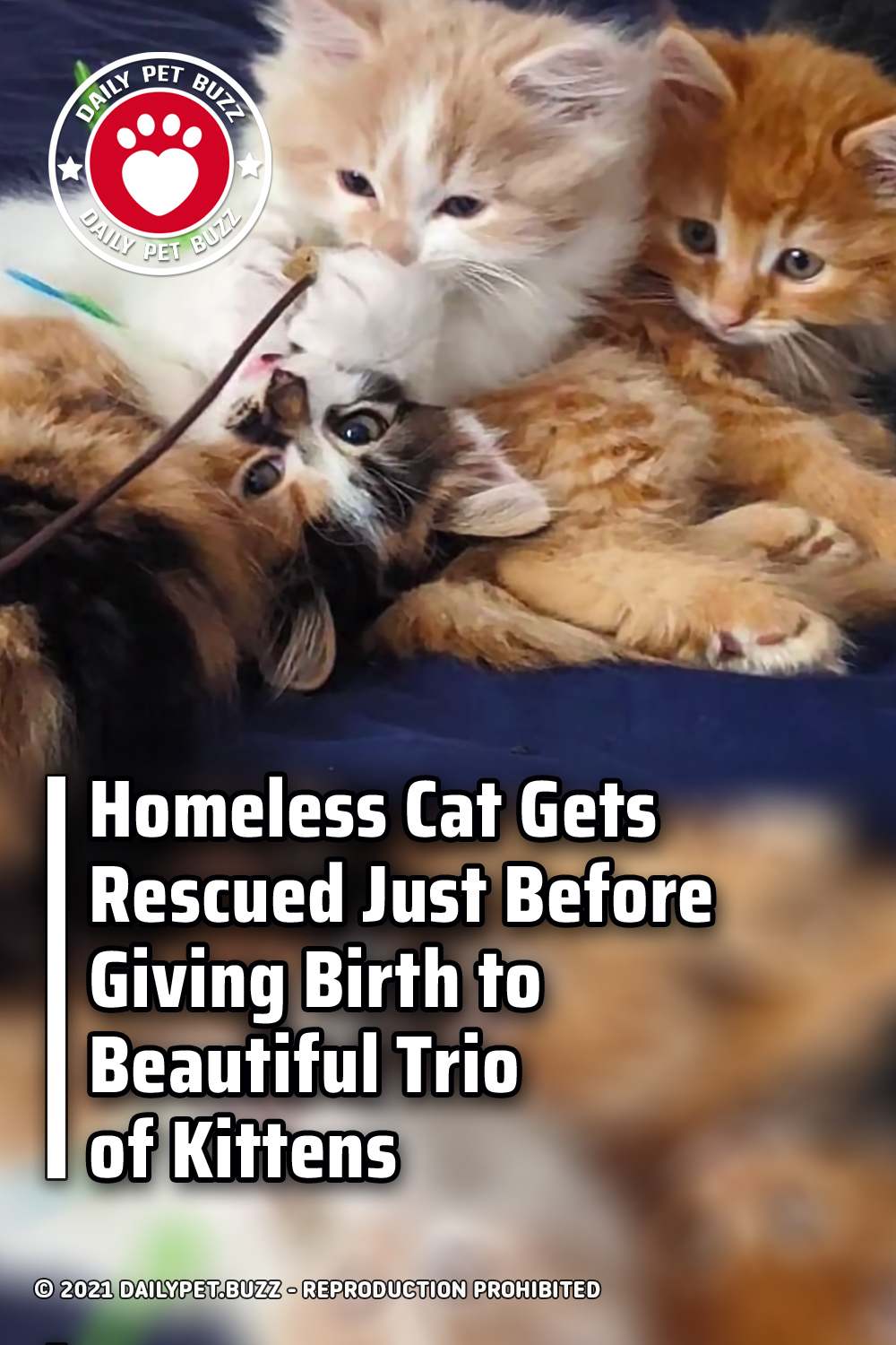 Homeless Cat Gets Rescued Just Before Giving Birth to Beautiful Trio of Kittens