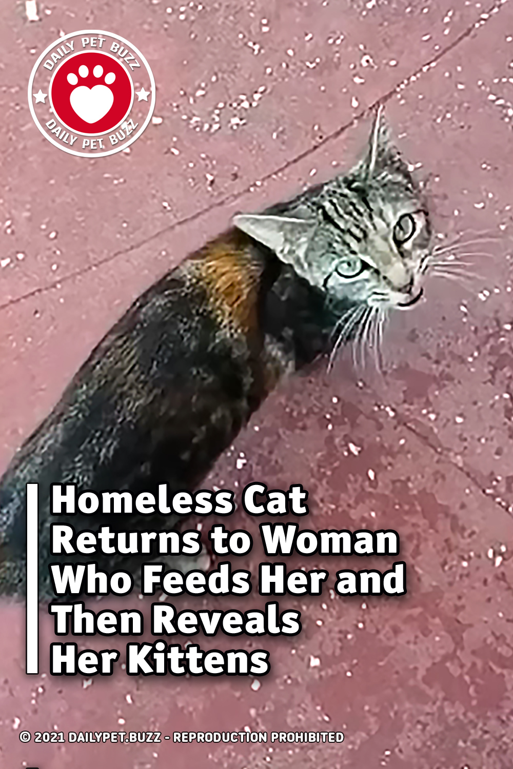 Homeless Cat Returns to Woman Who Feeds Her and Then Reveals Her Kittens