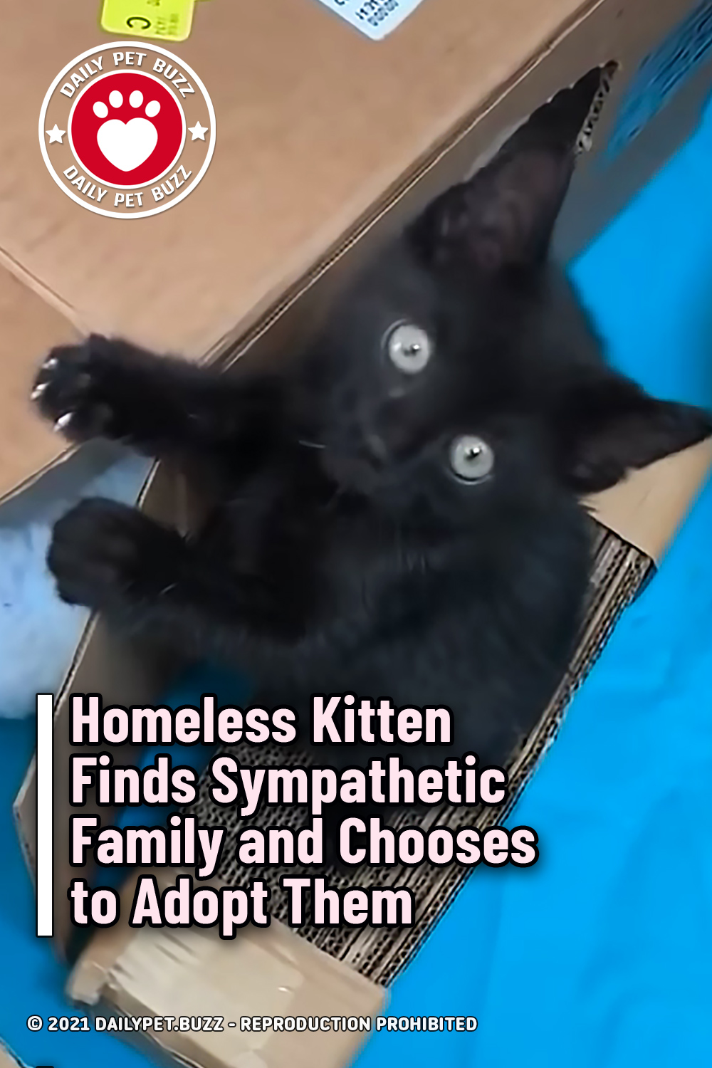 Homeless Kitten Finds Sympathetic Family and Chooses to Adopt Them