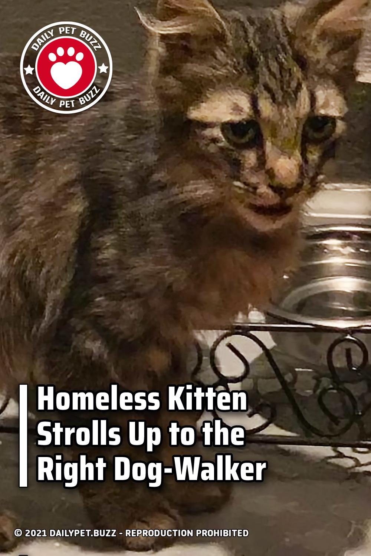 Homeless Kitten Strolls Up to the Right Dog-Walker