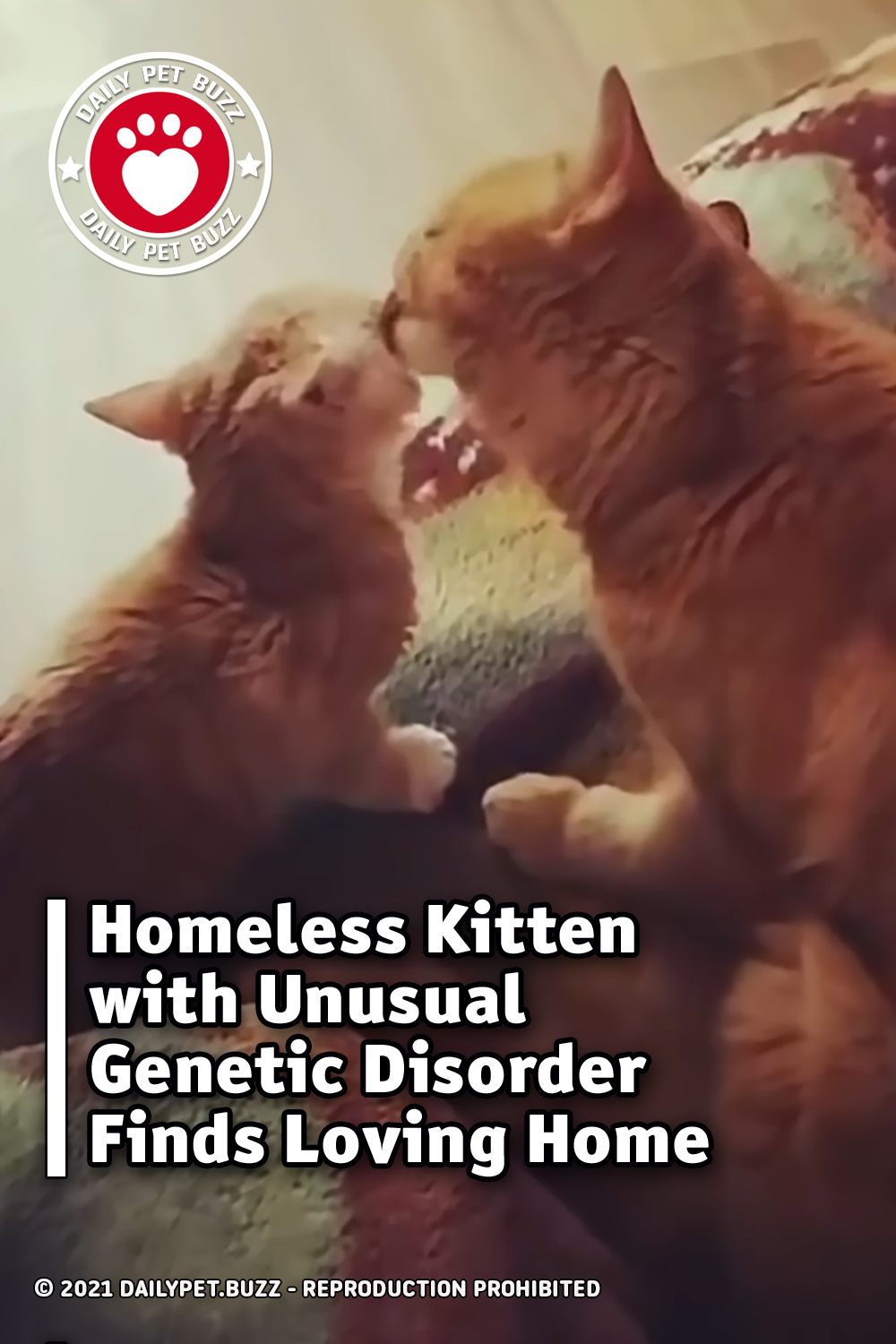 Homeless Kitten with Unusual Genetic Disorder Finds Loving Home