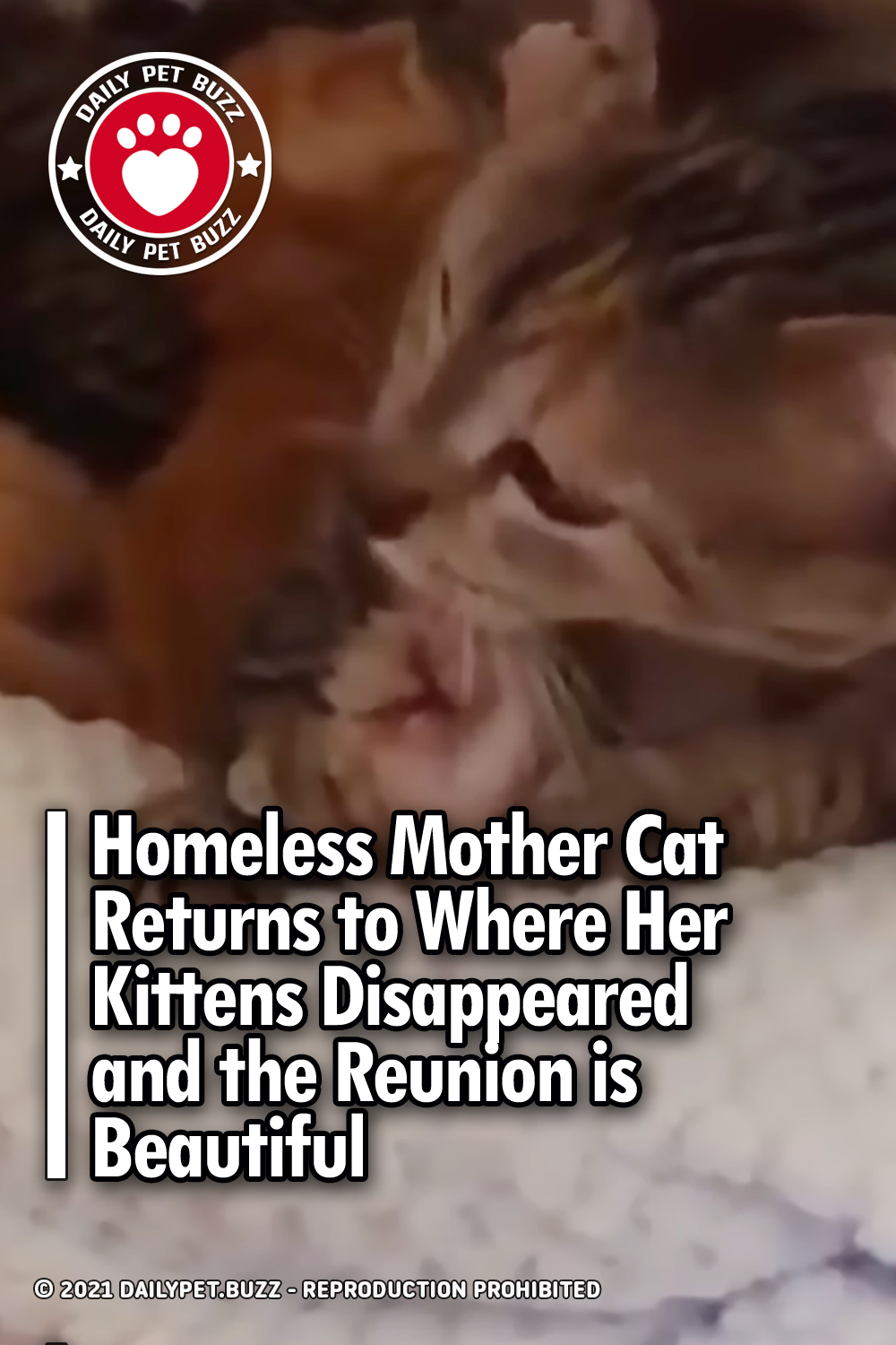 Homeless Mother Cat Returns to Where Her Kittens Disappeared and the Reunion is Beautiful