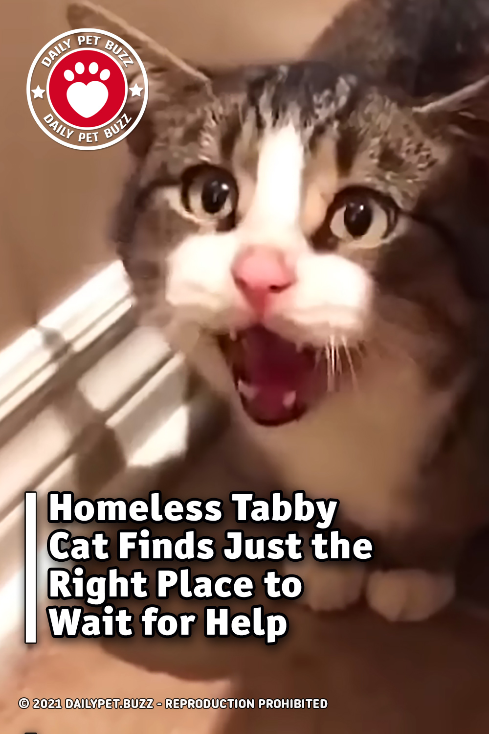 Homeless Tabby Cat Finds Just the Right Place to Wait for Help