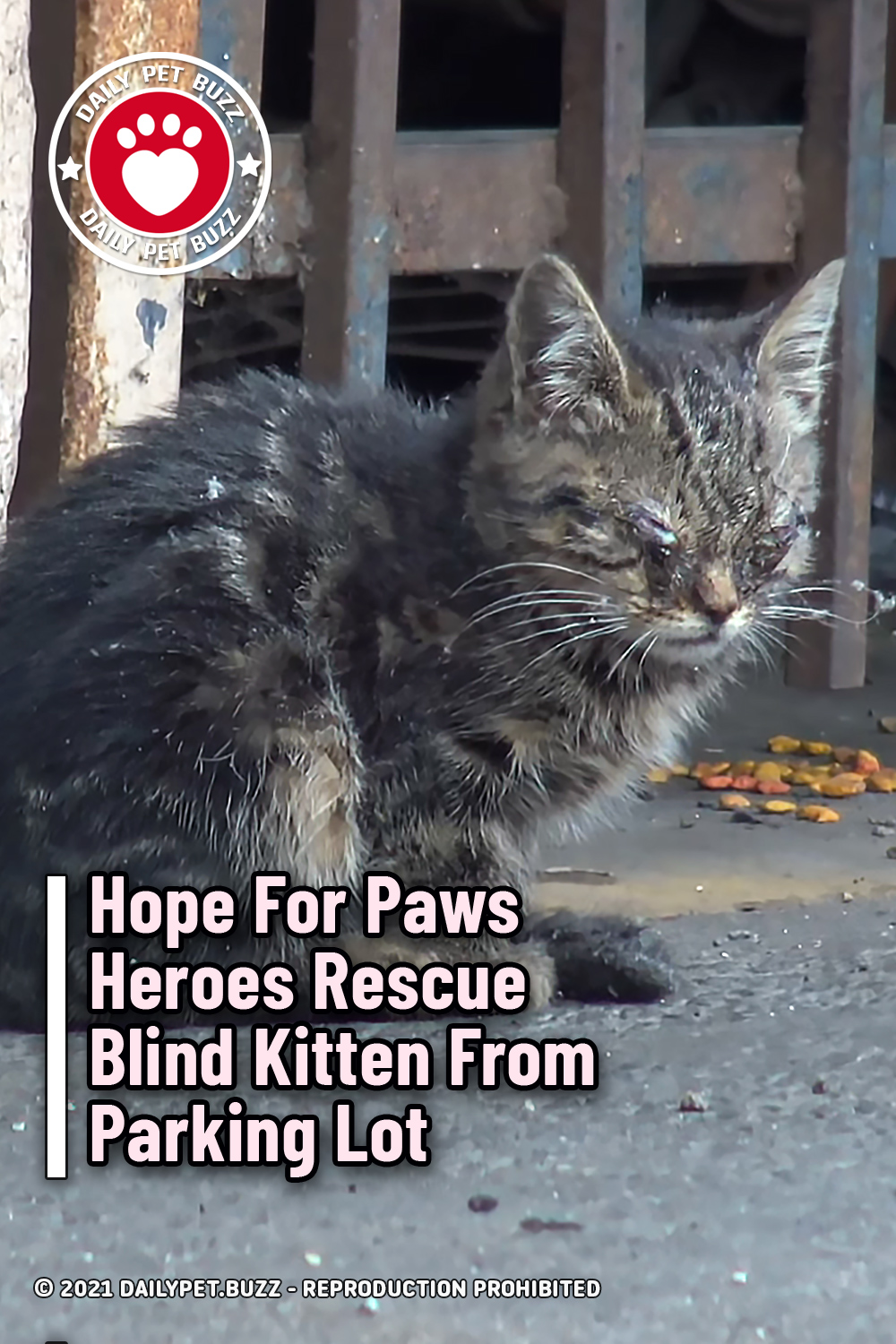 Hope For Paws Heroes Rescue Blind Kitten From Parking Lot