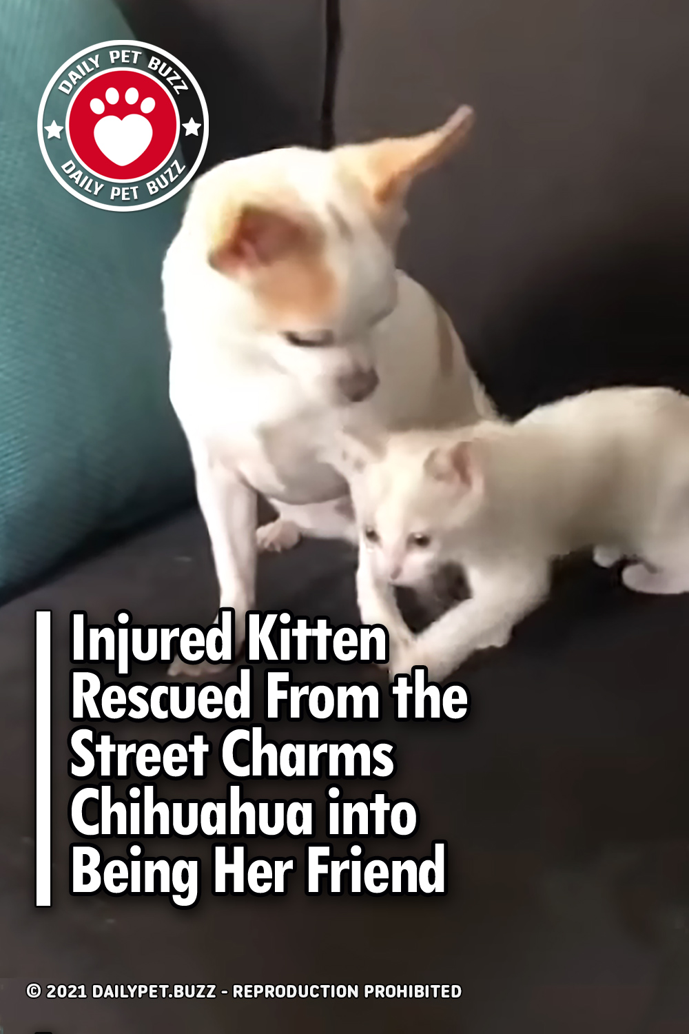 Injured Kitten Rescued From the Street Charms Chihuahua into Being Her Friend