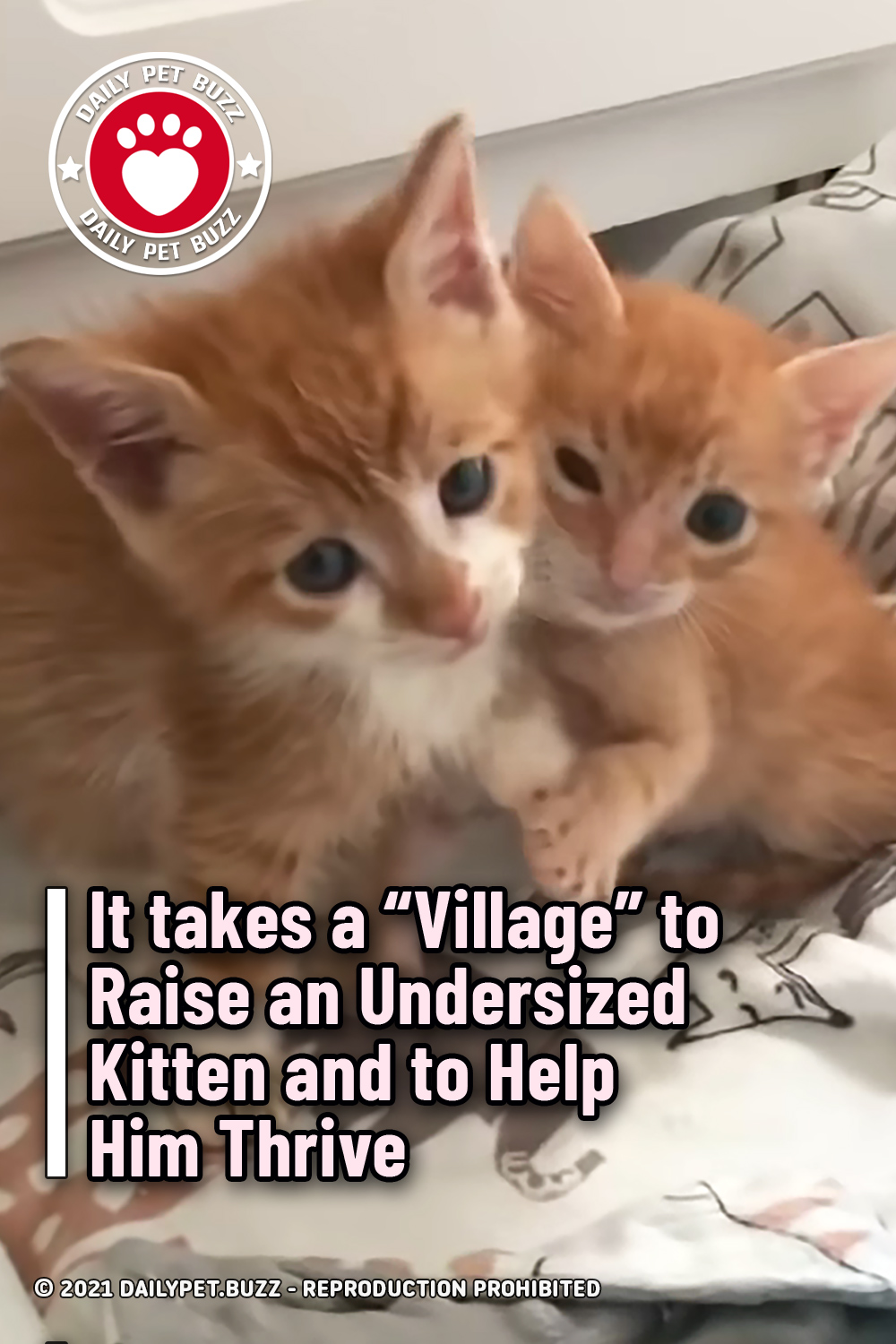 """It takes a """"Village"""" to Raise an Undersized Kitten and to Help Him Thrive"""