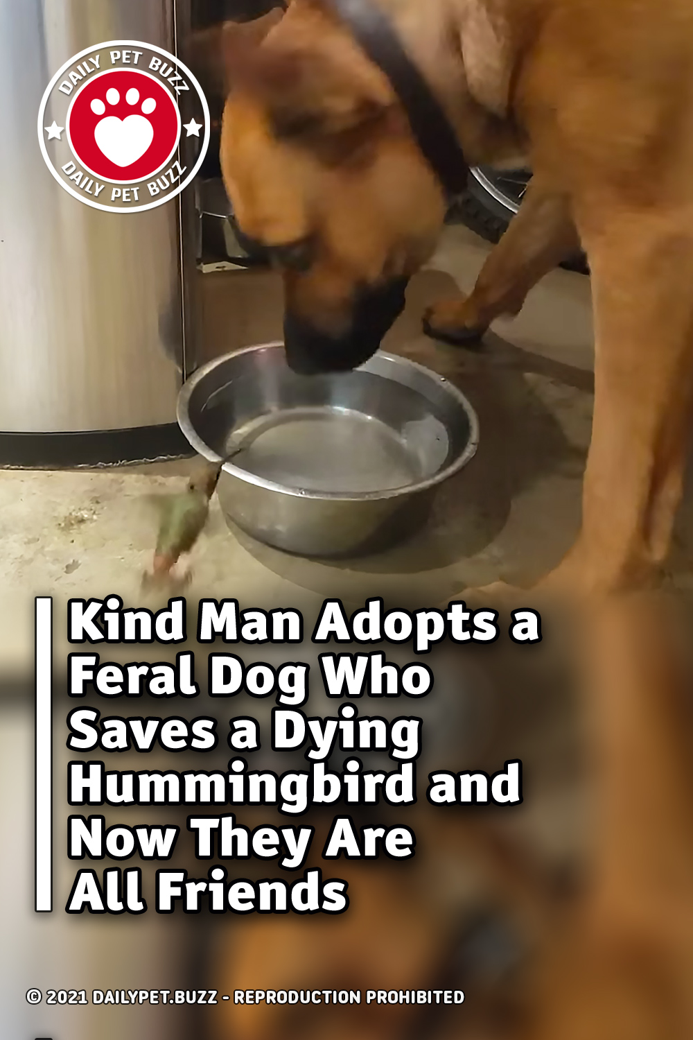 Kind Man Adopts a Feral Dog Who Saves a Dying Hummingbird and Now They Are All Friends