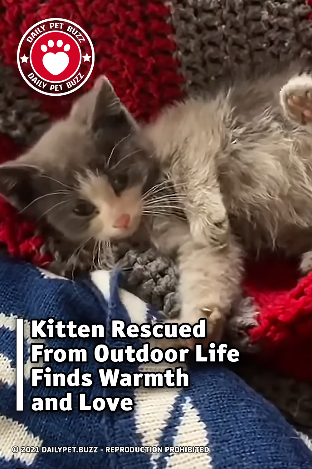 Kitten Rescued From Outdoor Life Finds Warmth and Love