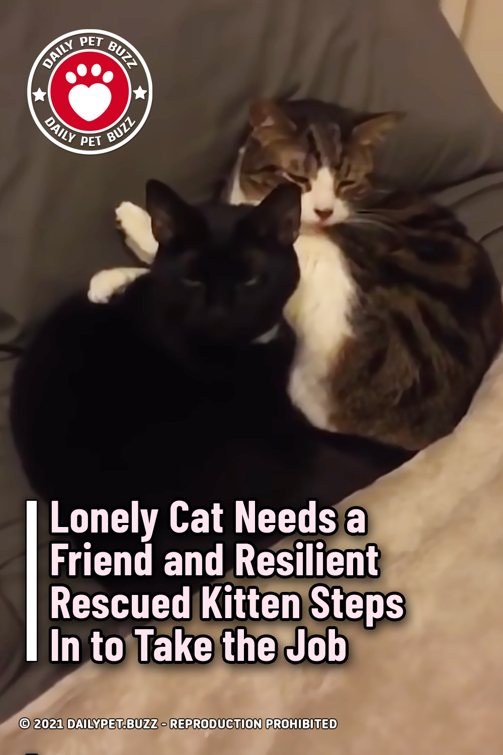Lonely Cat Needs a Friend and Resilient Rescued Kitten Steps In to Take the Job