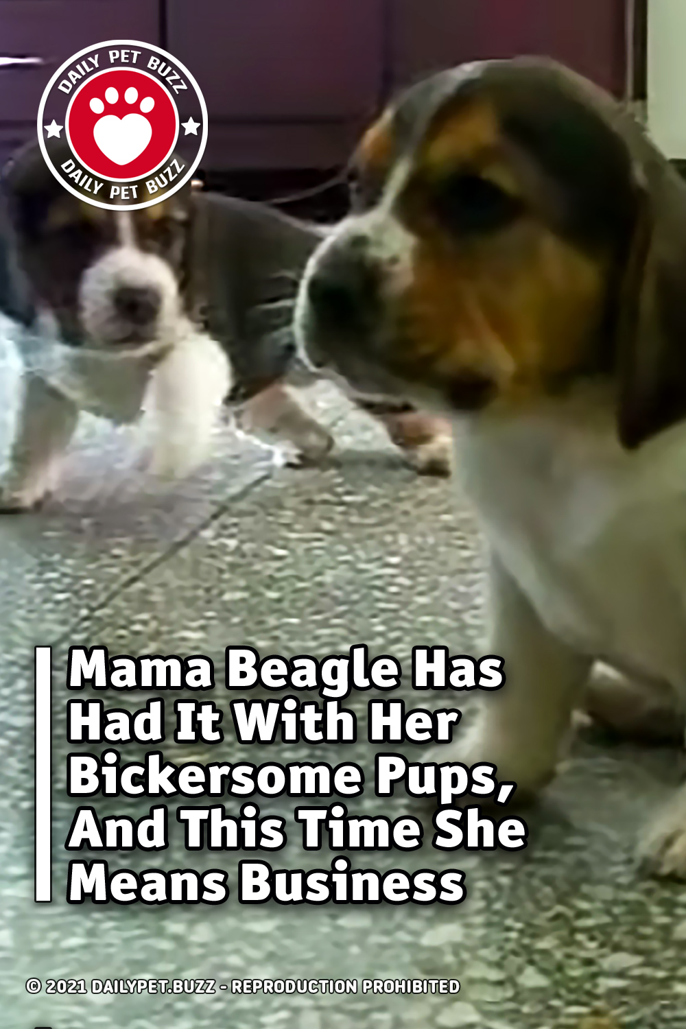 Mama Beagle Has Had It With Her Bickersome Pups, And This Time She Means Business