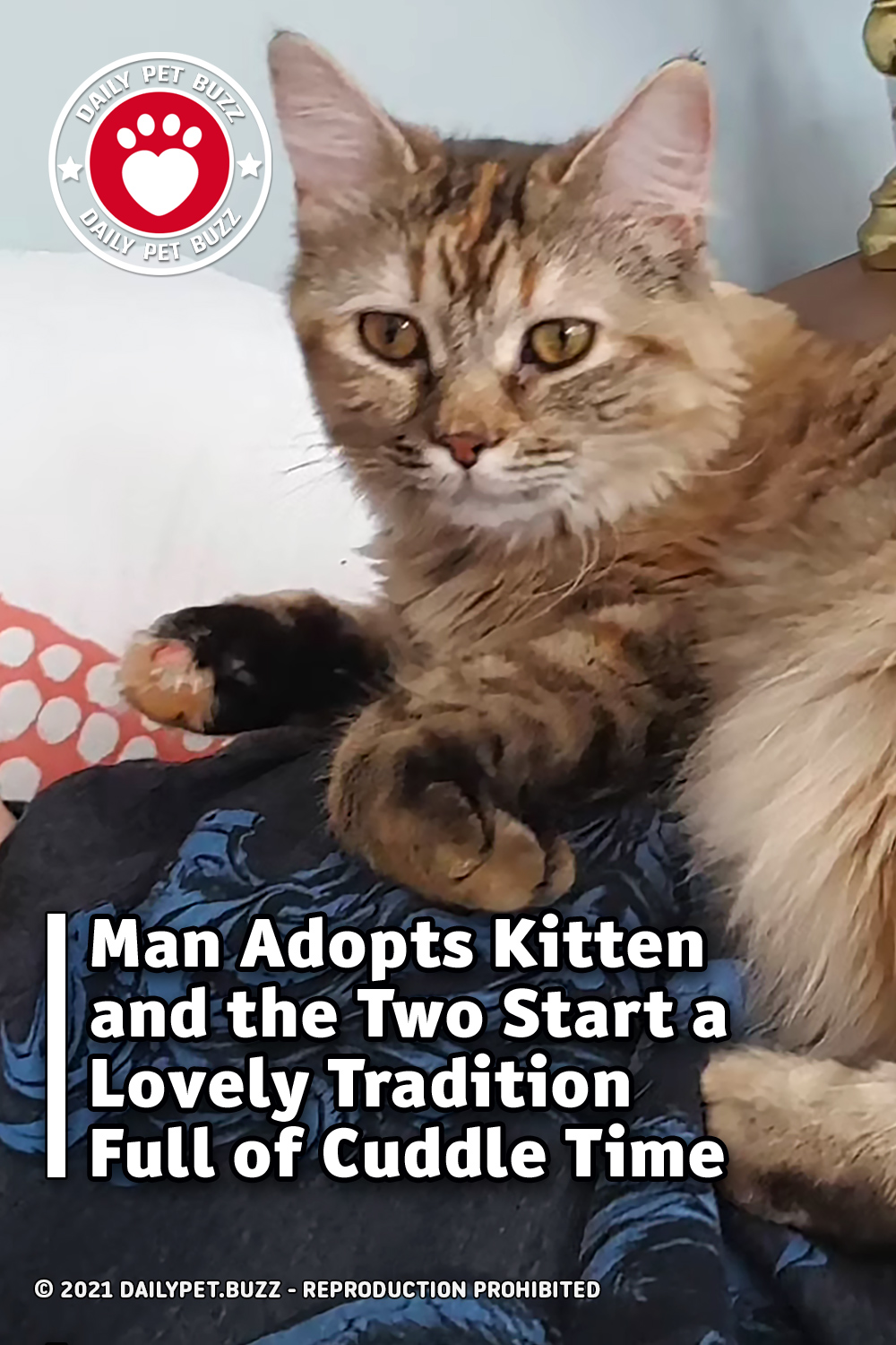 Man Adopts Kitten and the Two Start a Lovely Tradition Full of Cuddle Time