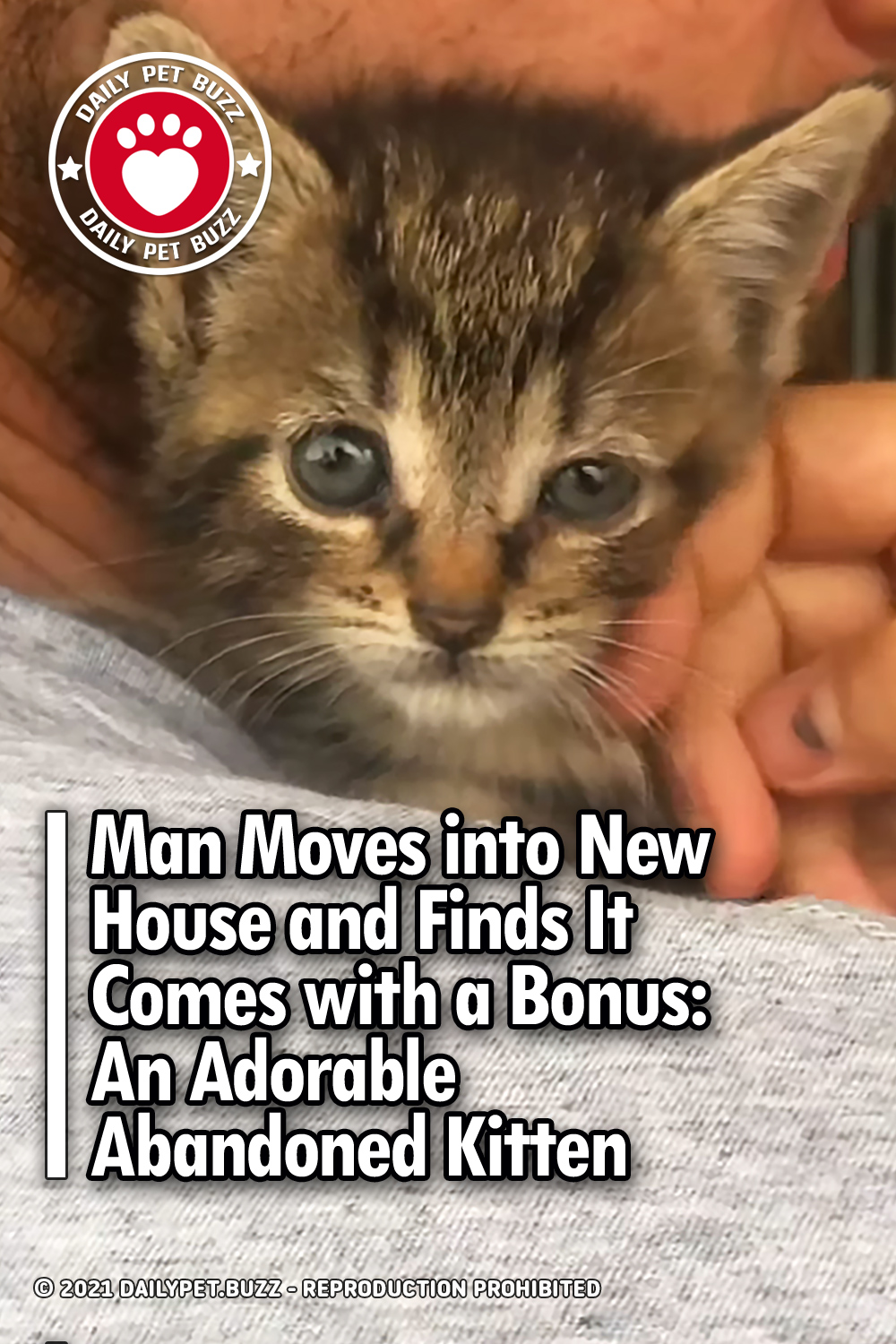 Man Moves into New House and Finds It Comes with a Bonus: An Adorable Abandoned Kitten